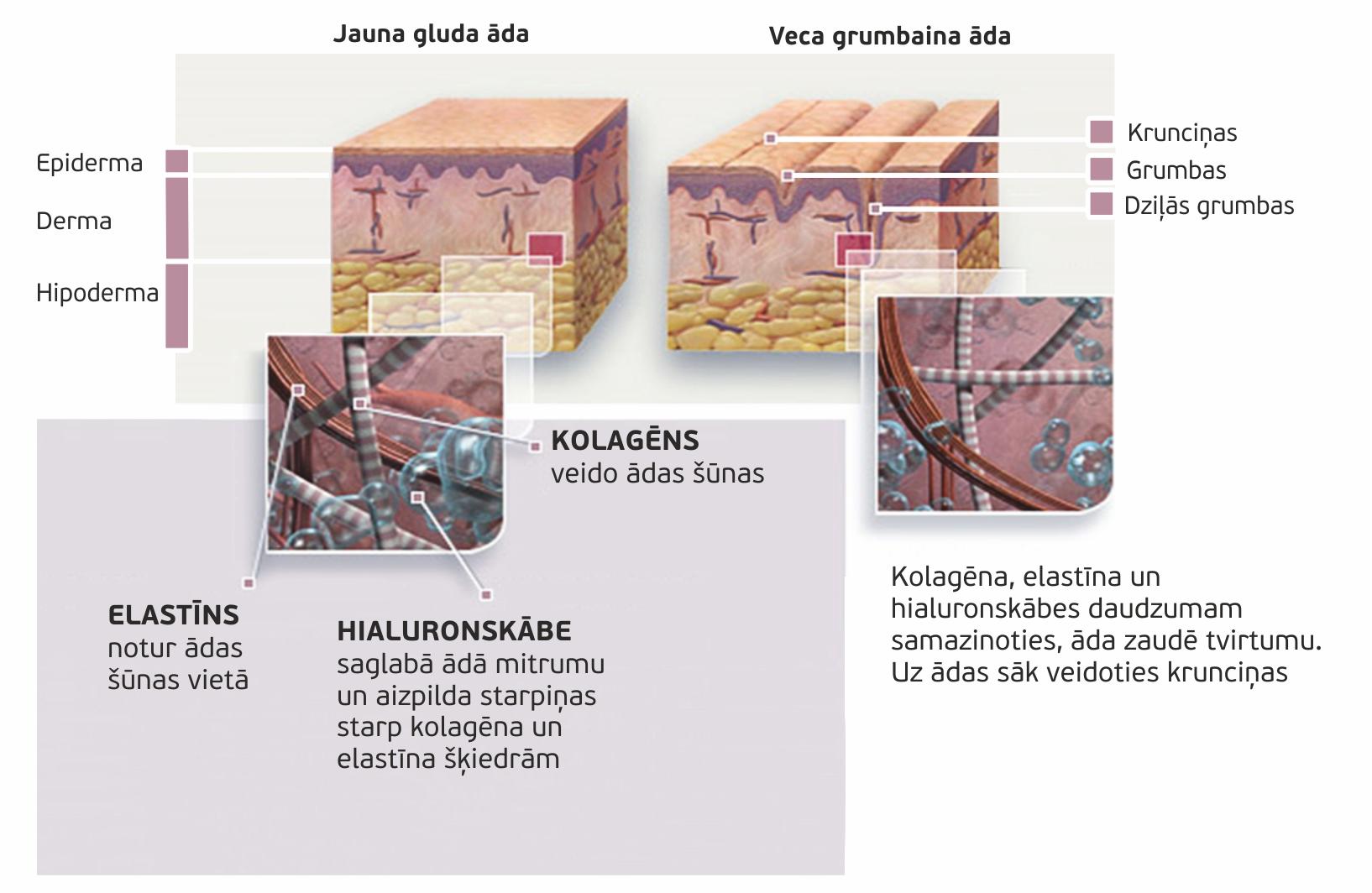 Skin%20structure_LV.jpg