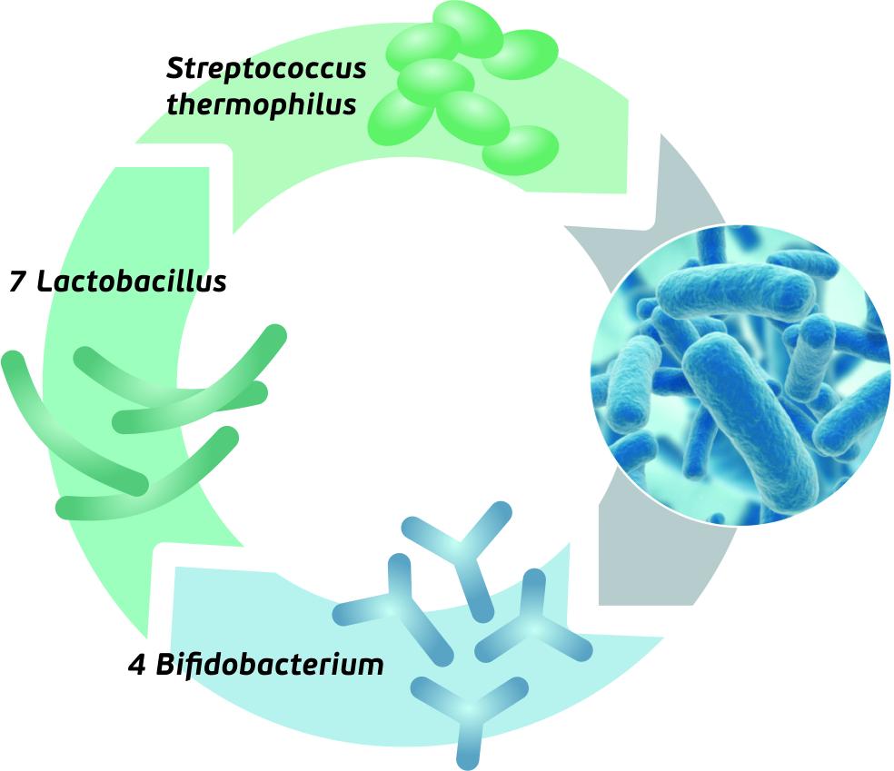 Dr.OHHIRA probiotikai